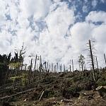Klimaziele von Paris: Der Beitrag der Landnutzung